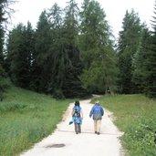 Der Weg vom Mendelpass zur Überetscher Hütte