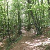 Der Forstweg führt uns durch einen Wald