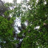 Unter dem Blätterdach am Fuße