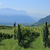 Kaltern Weinbau