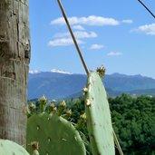 D-0707-missian-kirchhuegel-kaktus.jpg