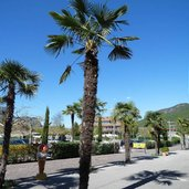 D-0736_st_josef_kalterersee_palmen.jpg