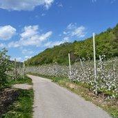 D-0759-radweg-zum-kalterer-see.jpg