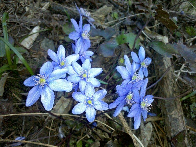 La valle della primavera appiano bz for Fiori che sbocciano