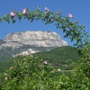 View from Riva di Sotto towards the Monte Macaion: if you take a closer look, you will discover Castel d'Appiano. Foto: AT, © Peer