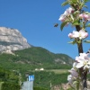 Riva di Sotto at the apple blossom, the ideal period for cycling tours. Foto: AT, © Peer