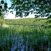The reed belt is habitat of many animals. Foto: AT, © Peer