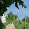 We leave behind the forest and proceed across vineyards. Foto: AT, © Peer