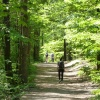 Via a forested trail you reach the lakes of Monticolo. Foto: AT, © Peer