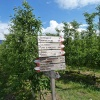 When we walk on towards Colterenzio, we come upon apple orchards. Foto: AT, © Peer