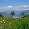 Blick über die Blumenwiese in Richtung Bozen und Dolomiten. Foto: AT, © Peer