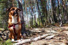 Highlights -> Hund & Haustier 2011