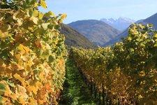 Törggelen -> Aussicht auf Weinreben Herbst 2011
