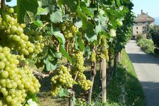Landwirtschaft 2011