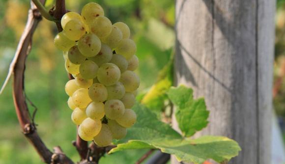 Wein 2011