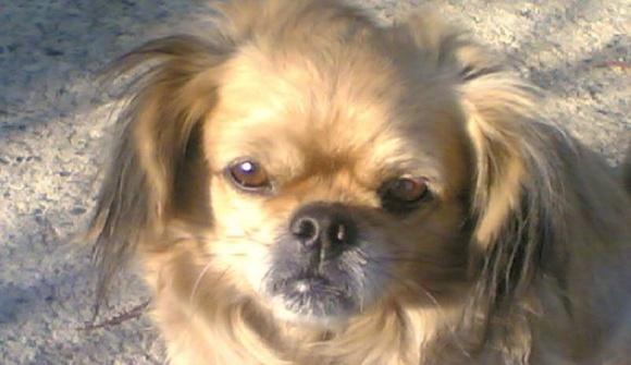 Hund & Haustier 2011