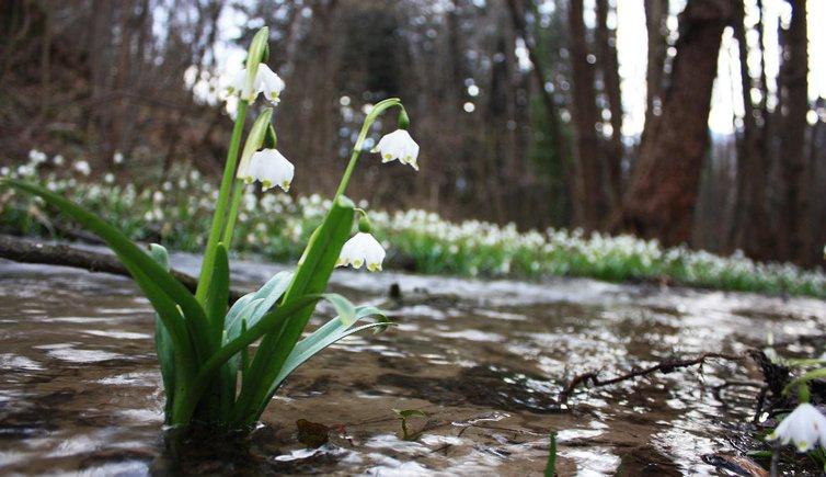 Frühlingstal, Foto: EMS, © Peer