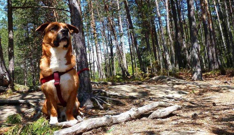Cani e Co., Foto: AT, © Peer