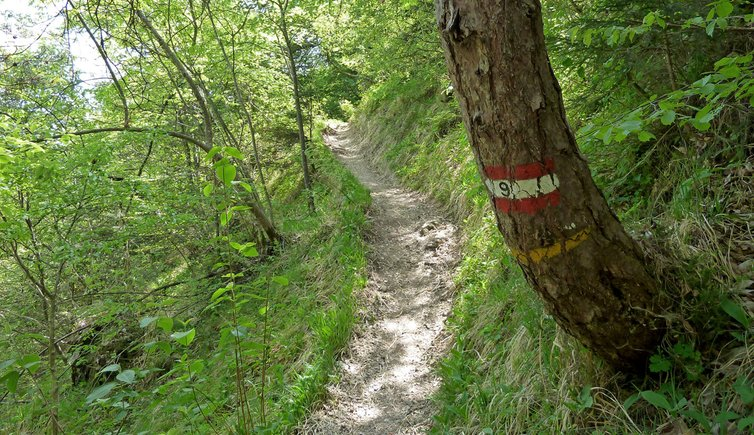 Am Eppaner Höhenweg nach Buchwald, Foto: AT, © Peer