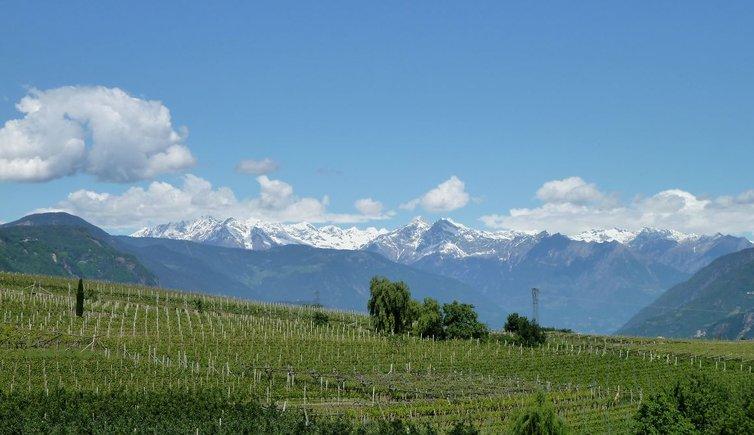 Wein-Tipps, Foto: AT, © Peer