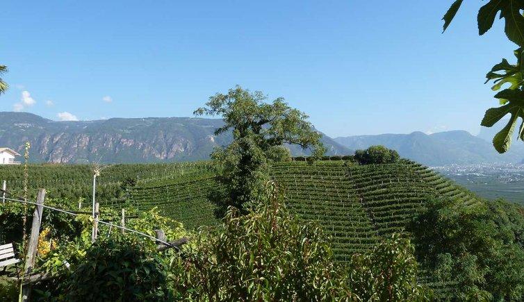 Geschichte des Weines, Foto: AT, © Peer