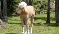 Pferde & Reiten 2011